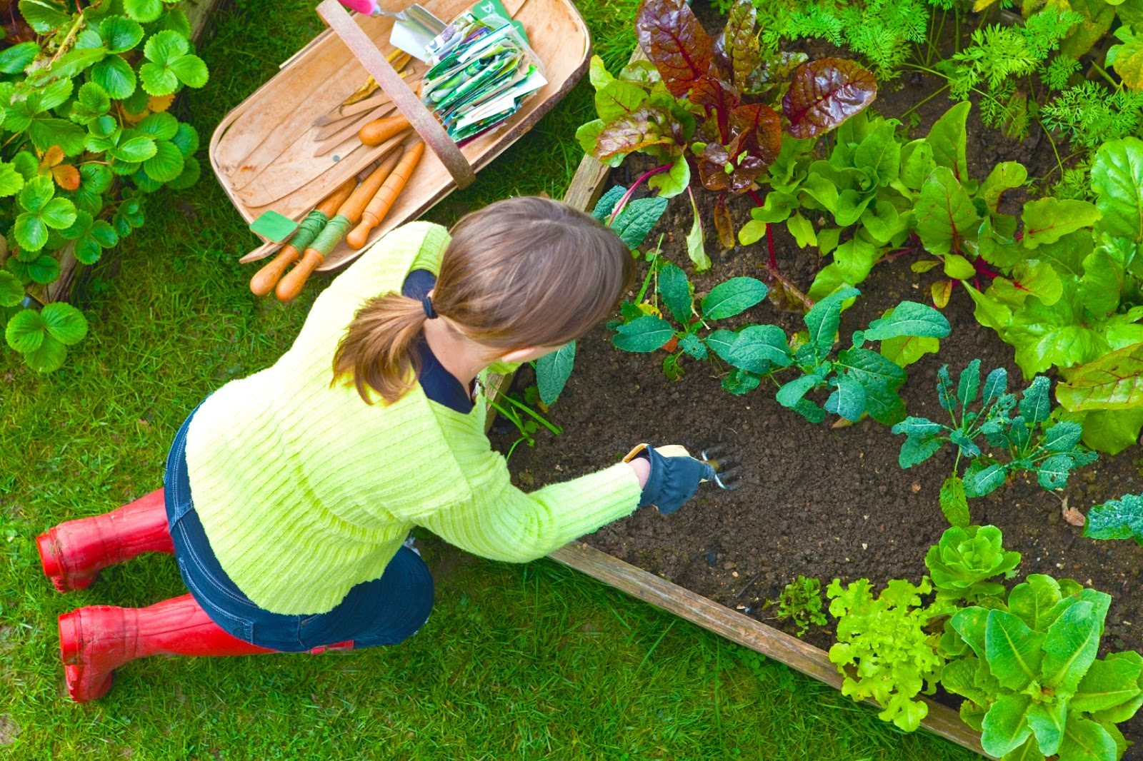 Veggie Garden Design
