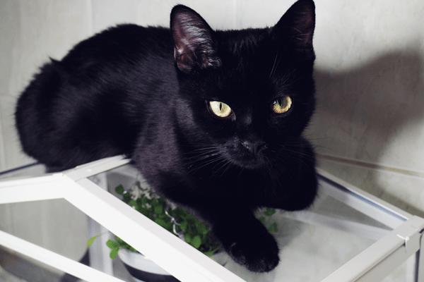 Jak uprawiać rośliny w mieszkaniu mając koty? – czyli Fresh & Green cz. II