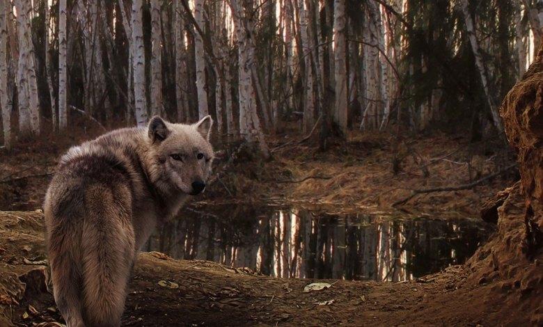 Lobo parado na entrada da caverna - Imagem do Tarrasque na Bota 04 - A mina perdida de Phandelver - Episódio 4 - Dançando com Lobos