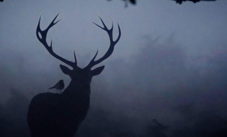 Silueta obscura de um Cervo - Imagem do Tarrasque na Bota 13 - A mina perdida de Phandelver - Episódio 13 - A Deusa do Infortúnio