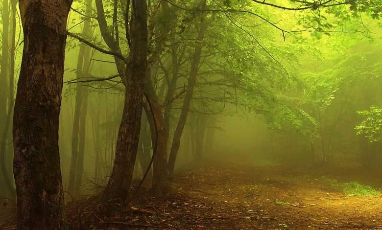 Trilha na floresta com uma iluminação esverdeada e amarelada do sol - Imagem do Tarrasque na Bota 28 - A mina perdida de Phandelver - Episódio 28 - Árvore do Trovão