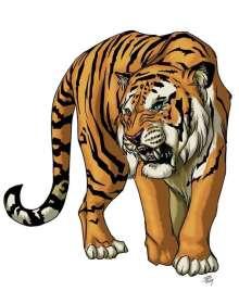 Christina Stiles Presents: Tiger by Jacob Blackmon