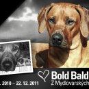 Bold Baldric Z Mydlovarských blat 02.07.2010 – 22.12.2011