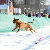 POZVÁNKA – 1. závody – Valentýnský coursing Sněžné 21.2.2015