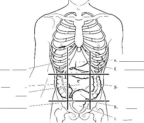 What are the abdominal quadrants? - proquestyamaha.web.fc2.com