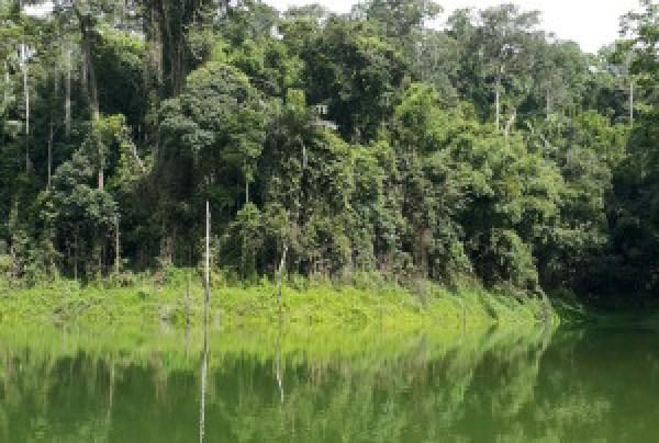 Die reënwoude van Maleisië slaan enige besoeker se asem weg.