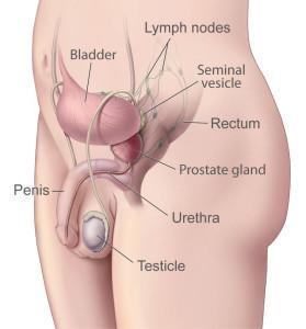 prostate-illustration-enlarge