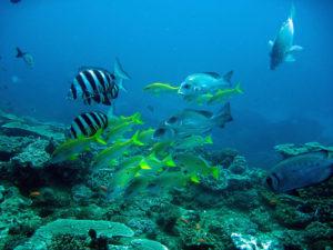 Sodwana-Bay-Reef