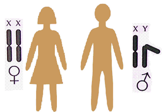 Wat gebeur as mens 'n X-chromosoom te veel of te min het?