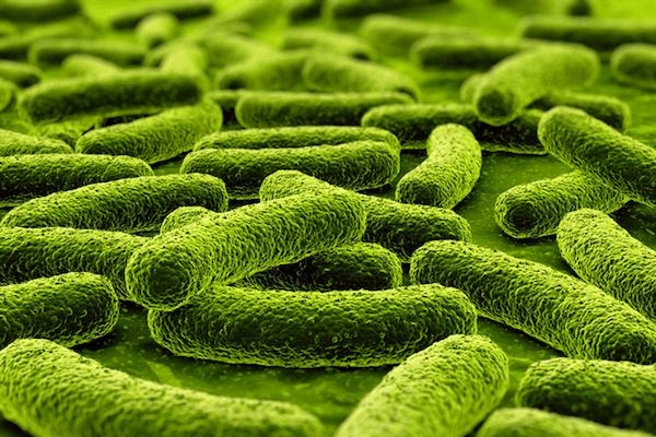 TB in kinders kan goed behandel word