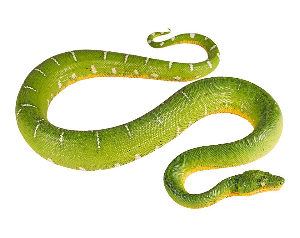 Hoe het slang sy gif gekry?
