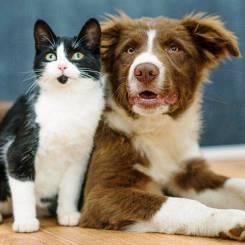 Kat en Hond: Die geheime lewe van jou troeteldiere