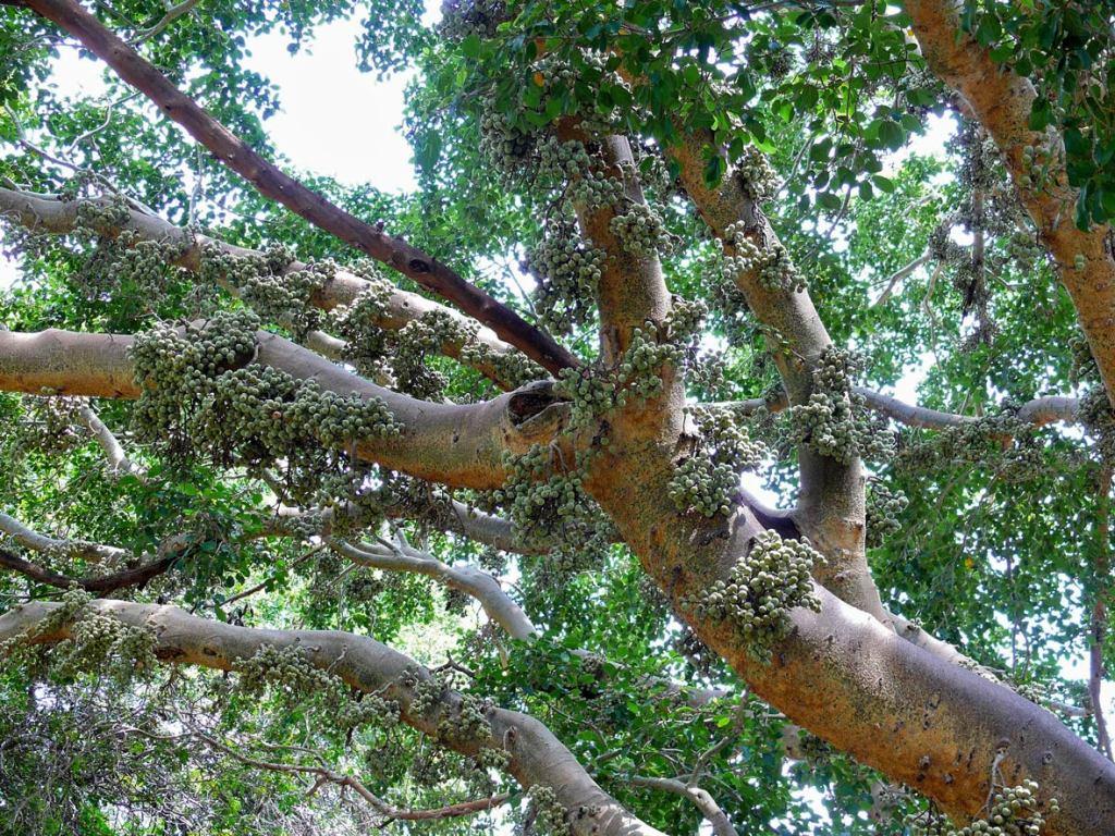 Die verband tussen bome en klimaatsverandering