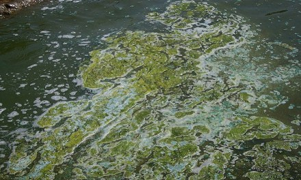 Rick Scott Blames Obama for 'Guacamole-Thick' Coastal Algae Blooms That His Own Policies Caused