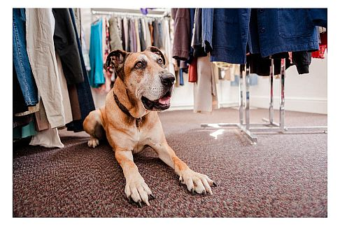 Our Shops RSPCA South Cotswolds Branch
