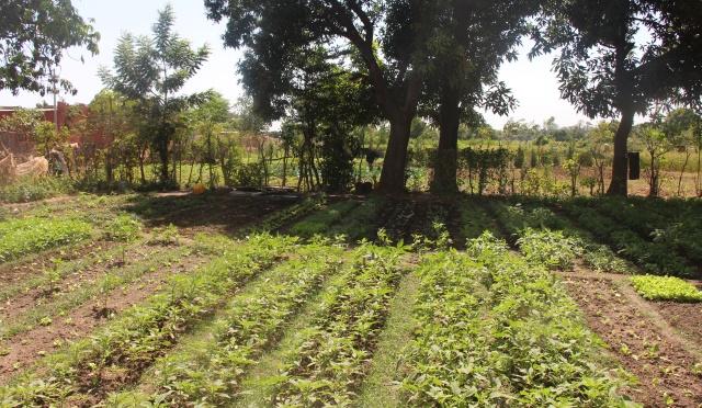 le jardin de légume de Saïdou YONLI