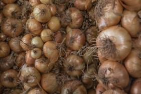 Cipolla bionda di Cureggio e Fontaneto. Presidio Slowfood