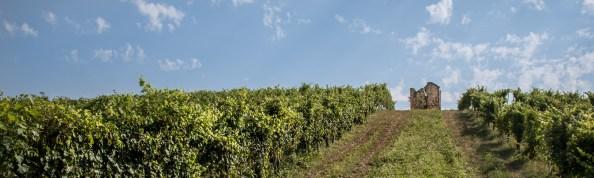 Vecchio roccolo nelle Vigne di Motfrei. Azienda Agricola Francesco Brigatti. Suno