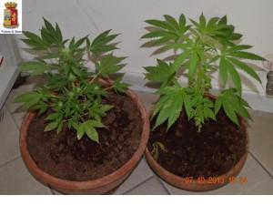maijuana sequestrata