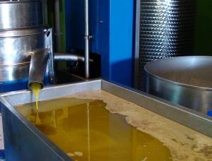 Olio di oliva prodotto in provincia di Taranto