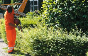 manutenzione verde pubblico orizzontale