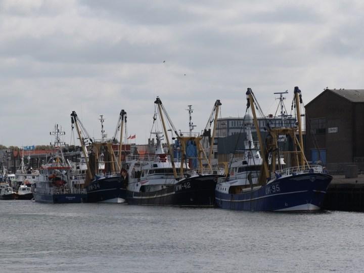 Recordjaar voor haven Amsterdam: Lichte daling IJmuiden