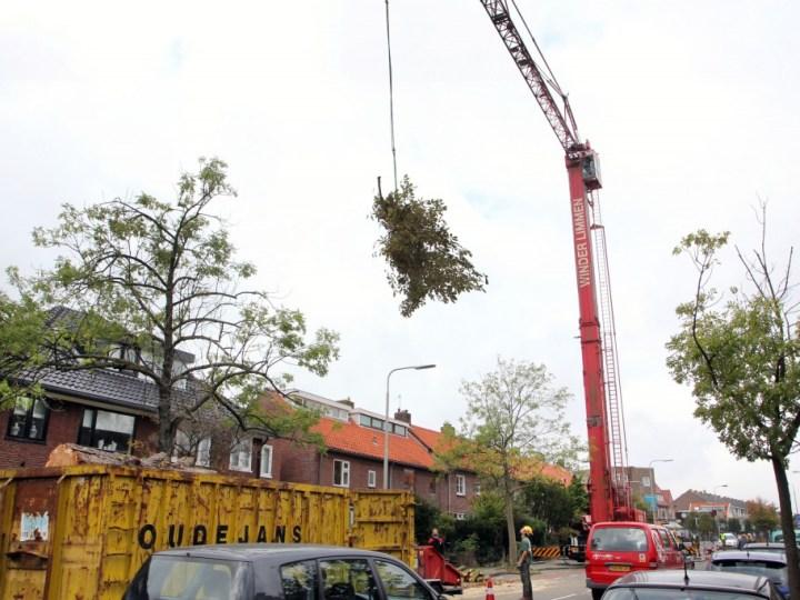 Santpoort is bijzondere boom kwijt