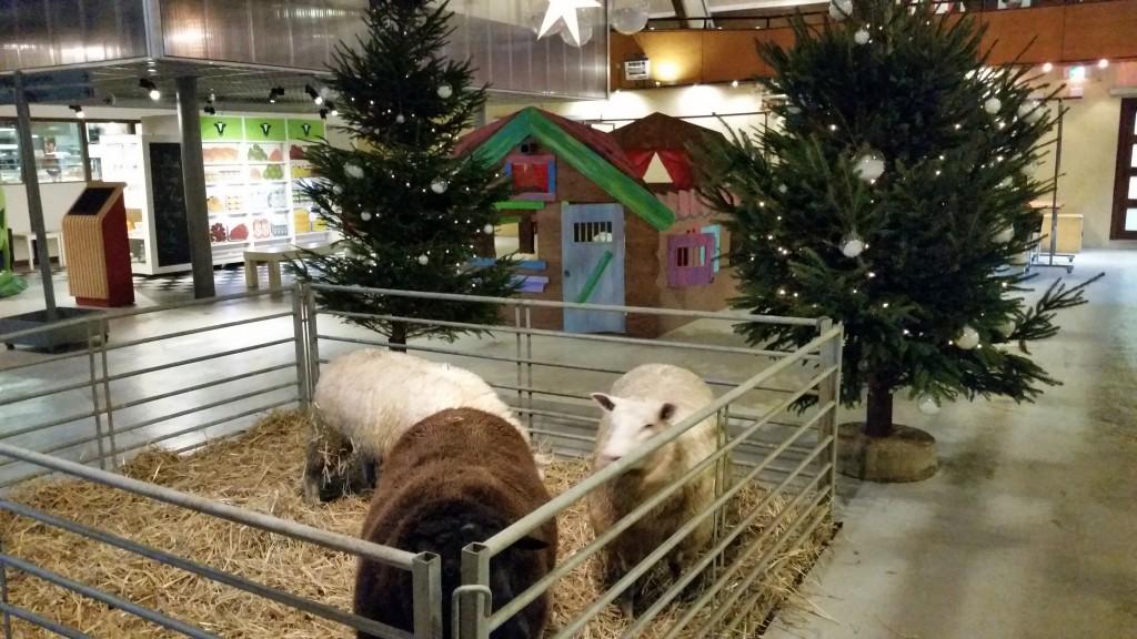 Kerst op boerderij Zorgvrij