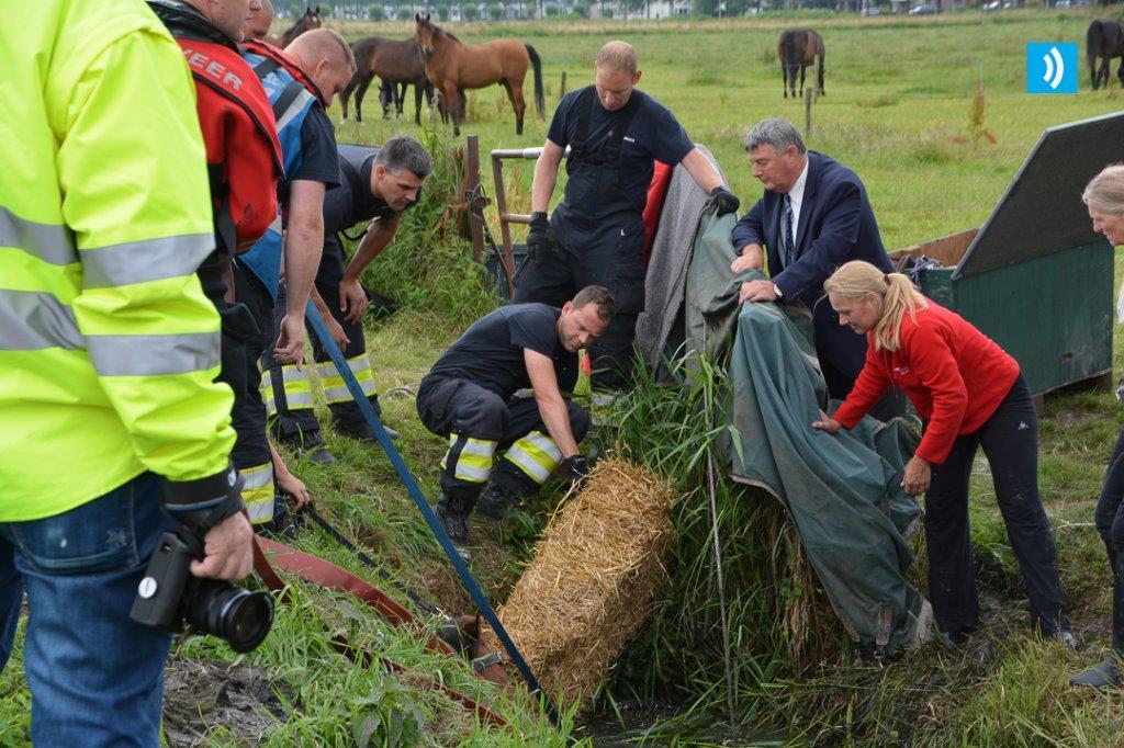 2016-06-28 Paard in de sloot Velserbroek (1)