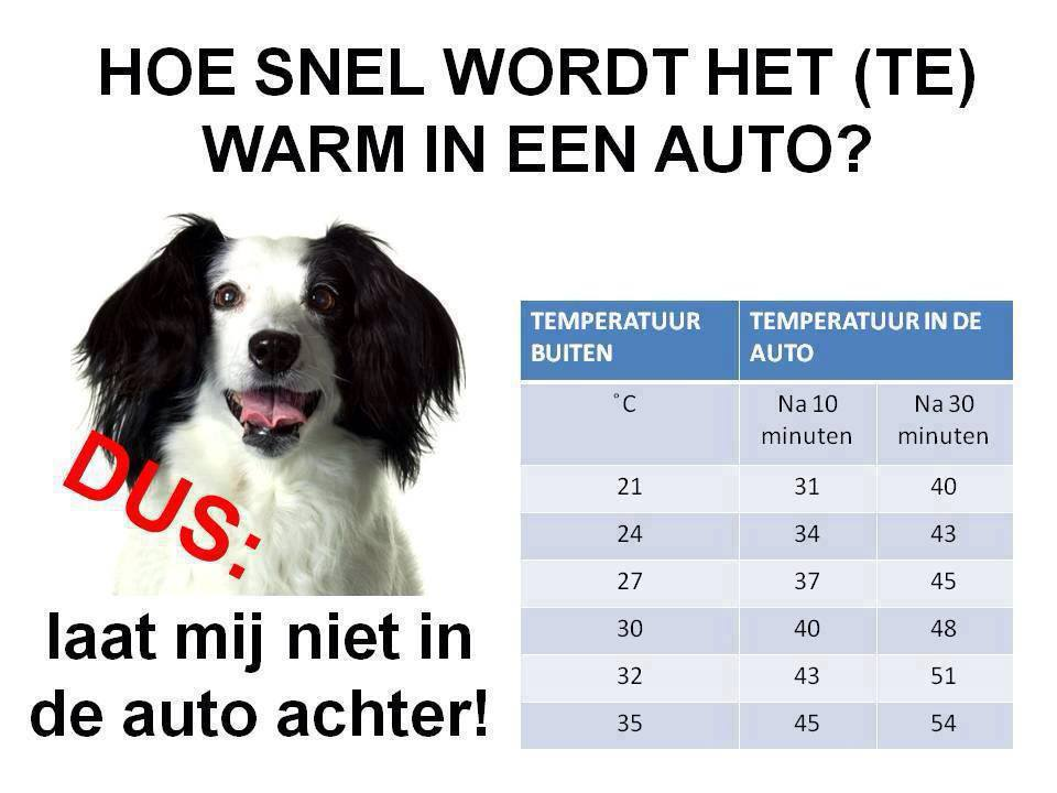 Hond-in-auto-niet-achter-laten