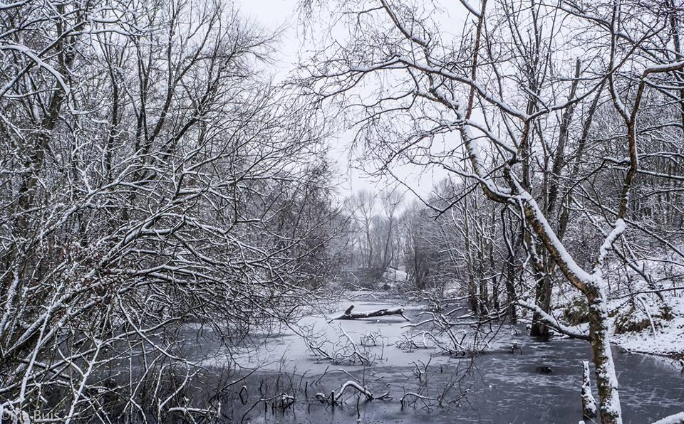 Sneeuw Ria Buis01