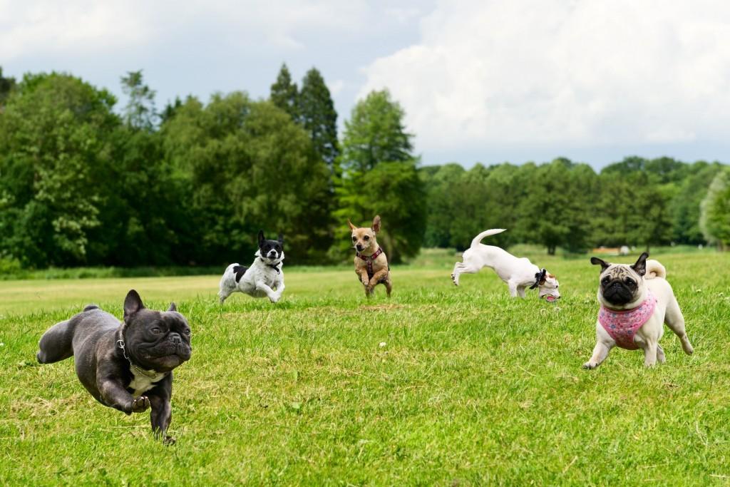 Honden en de Velsense parken