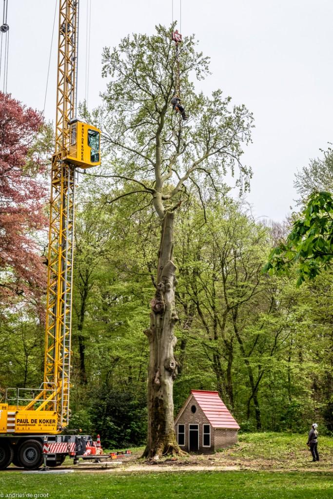 Boom Velserbeek-9952