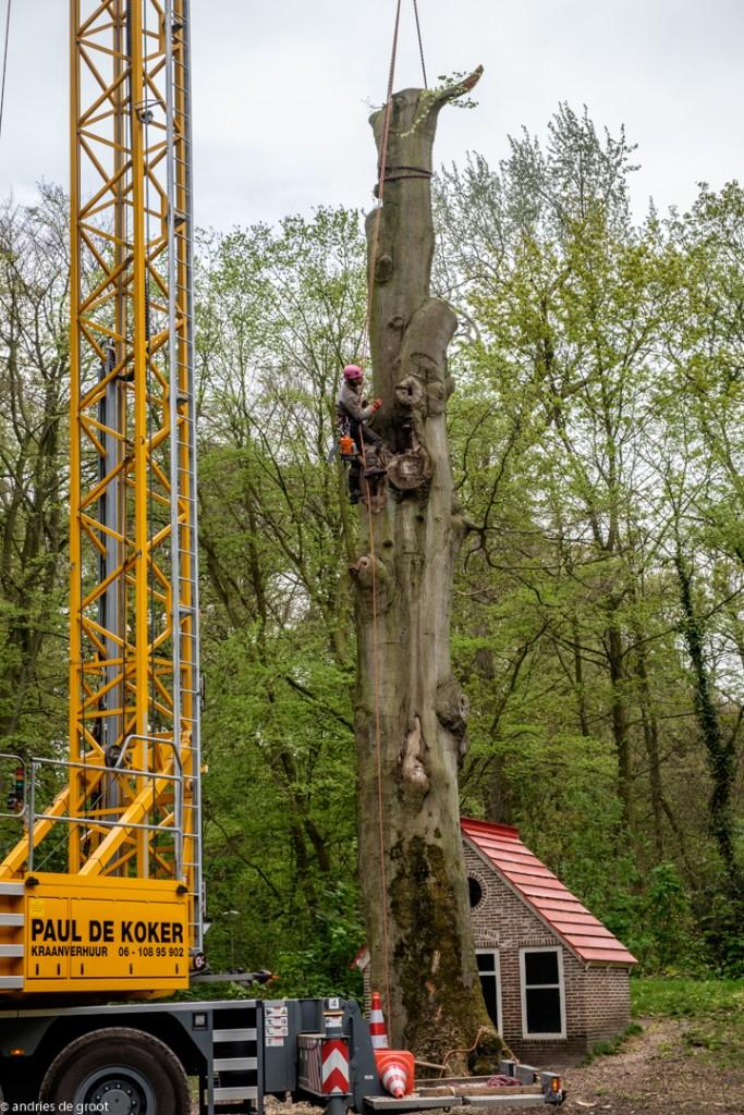 Boom Velserbeek-9985