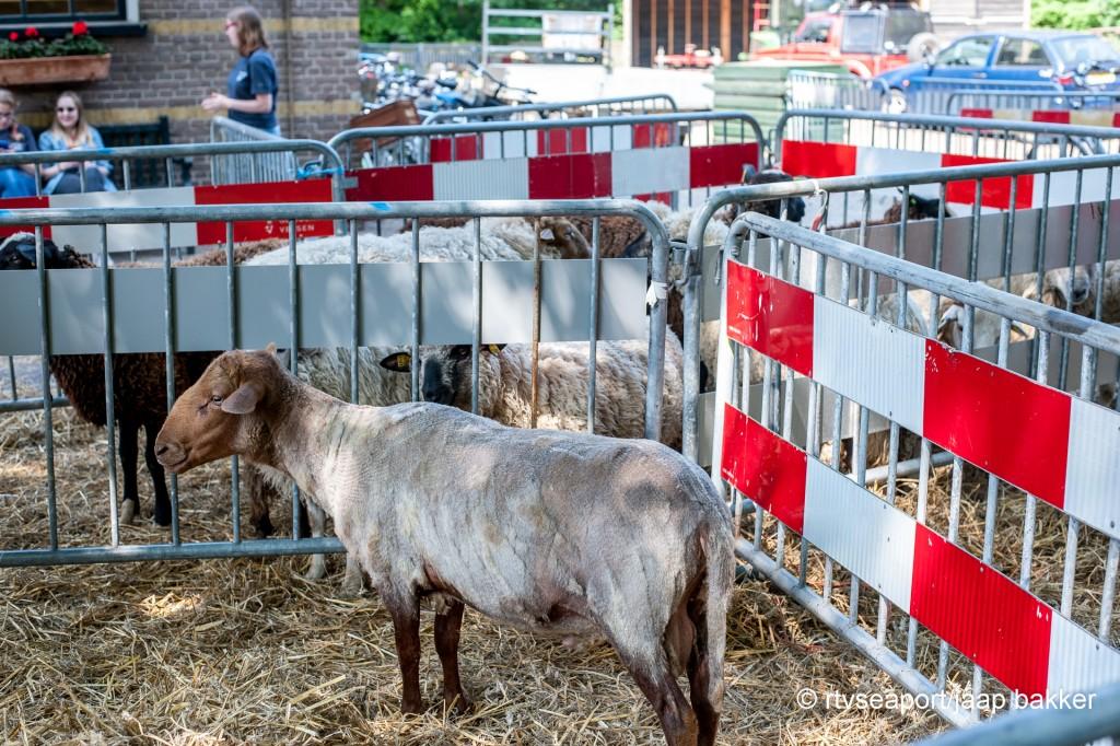 pinsteren in Velserbeek (4)