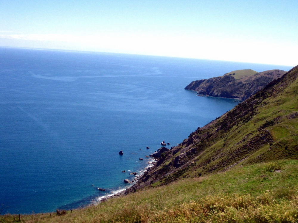 Cable Bay Hike in Nelson New Zealand