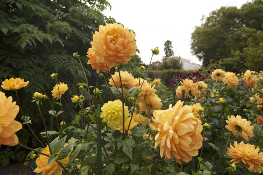 Christchurch Botanical Garden - New Zealand's South Island
