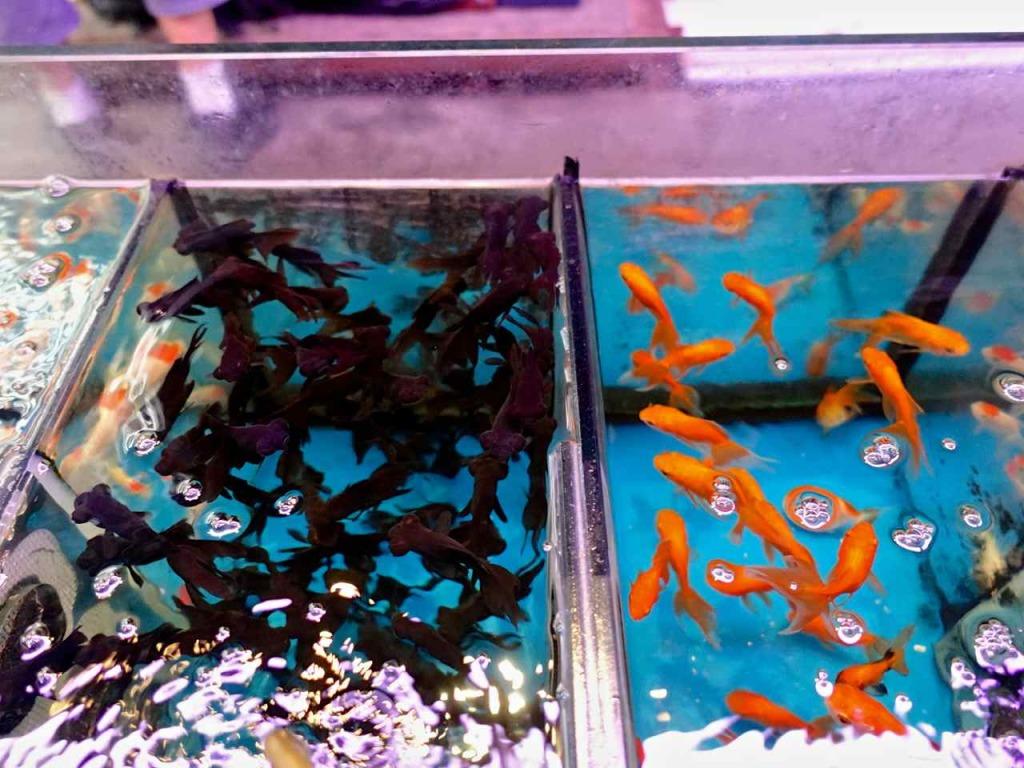 Goldfish Market Kowloon