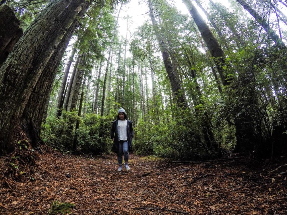 GoPro Timelapse Redwood Forest