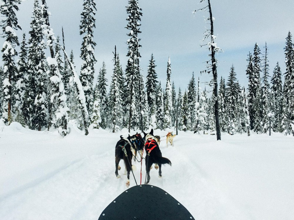 Dogsledding | www.rtwgirl.com