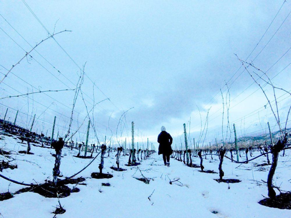 Therapy Winery Vineyard Walk - Okanagan Wine Country