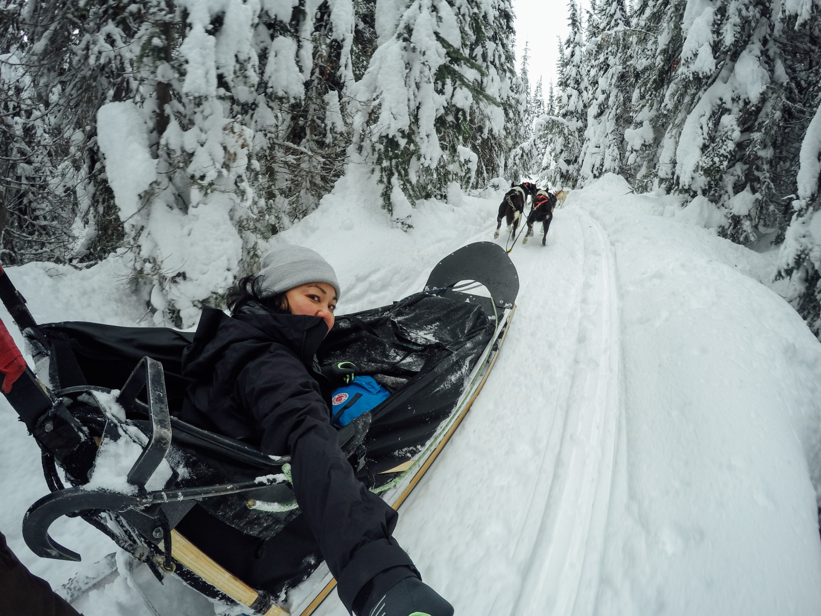Dog Sledding GoPro