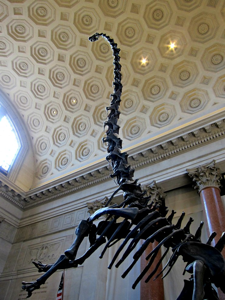 Natural History Museum - New York Photos| www.rtwgirl.com