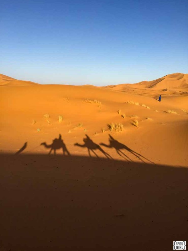 Camel shadows - Sahara Desert Photos
