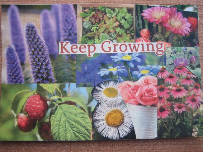 "This collage is called Keep Growing and is made from paper on reclaimed postcard. The size is 4"" x 6,"" and the cost is $20. including postage."