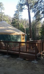 A green yurt sits in the forest. A wooden ramp leads to a wooden deck in front of the yurt.