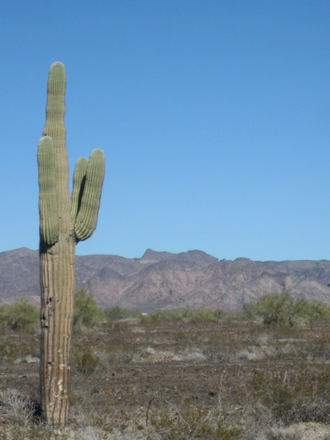seguaro cactus stands in foreground, scrubby land behind it, rugged mountains at the back