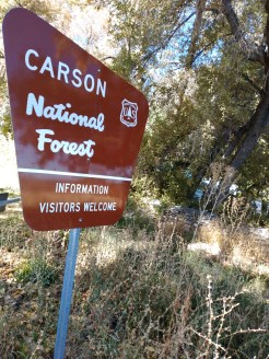brown metal sign reading Carson National Forest Information Visitors Welcome