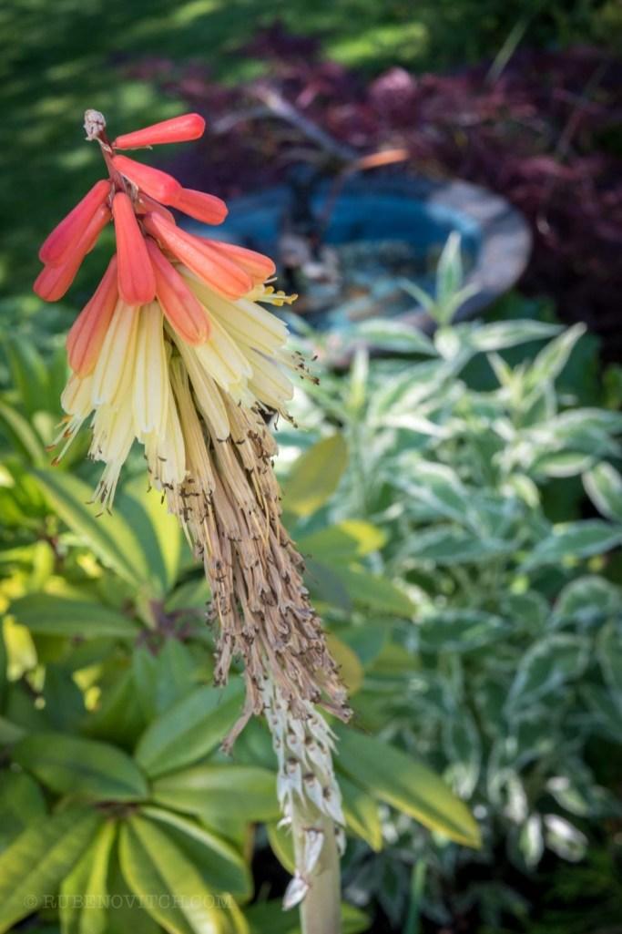 GardenTour-1440810