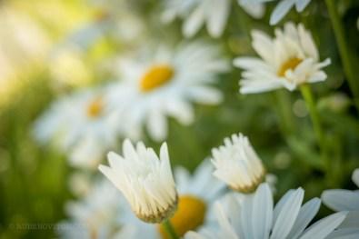 GardenTour-1450018